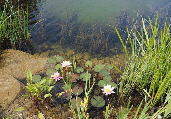 martin-haeringer-gartenbau-landschaftsbau-gartenbau-schwimmteich-der-naturnahe-schnaitsee-galerie-05
