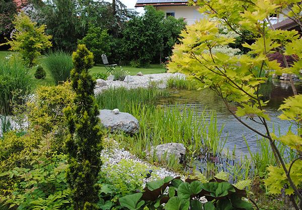 martin-haeringer-gartenbau-landschaftsbau-gartenbau-schwimmteich-der-naturnahe-schnaitsee-galerie-09