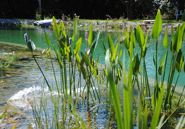 martin-haeringer-gartenbau-landschaftsbau-garten-schwimmteich-der-kleine-see-taufkirchen-galerie-08