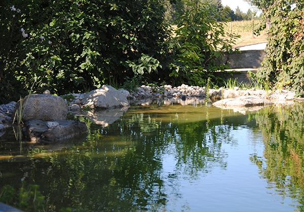 martin-haeringer-gartenbau-landschaftsbau-garten-schwimmteich-der-kuschlige-haag-galerie-06