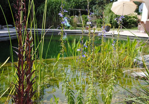 martin-haeringer-gartenbau-landschaftsbau-garten-schwimmteich-der-runde-muehldorf-galerie-08