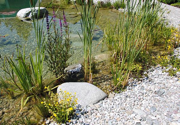 martin-haeringer-gartenbau-landschaftsbau-garten-schwimmteich-der-traumhafte-rosenheim-galerie-08